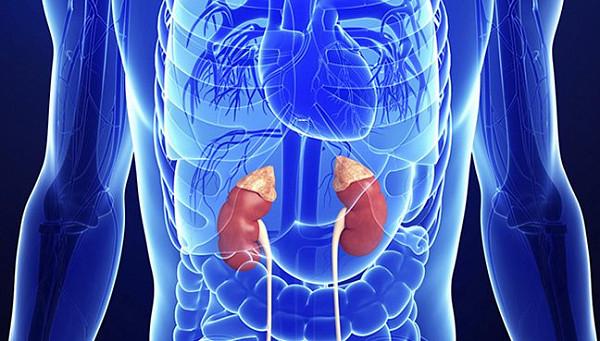 Гормон кортизол — за что отвечает, какая норма содержания в крови, показания к анализу